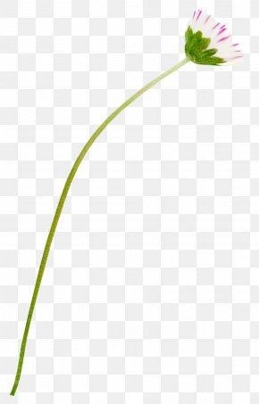 Leaf - Petal Leaf Grasses Plant Stem Line PNG