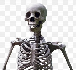 Skeleton - Human Skeleton PNG