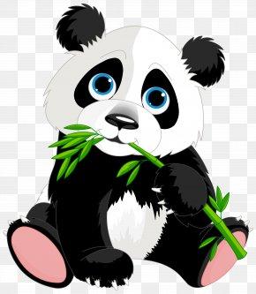 Cute Panda Cartoon Clipart Image - Giant Panda Red Panda Panda Illustrations Clip Art PNG
