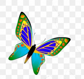 Blue Butterfly - Butterfly Insect Euclidean Vector PNG