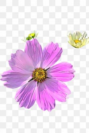 Sulfur Cosmos Garden Cosmos - Flower Petal Plant Violet Purple PNG