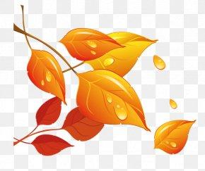 Golden Autumn Leaves - Autumn Leaf Clip Art PNG