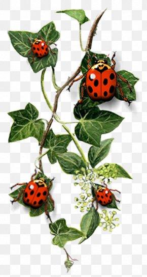 Ladybug - Common Ivy Tattoo Idea Landscape Design PNG