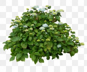 Annual Plant Shrub - Plant Flower Green Leaf Flowering Plant PNG