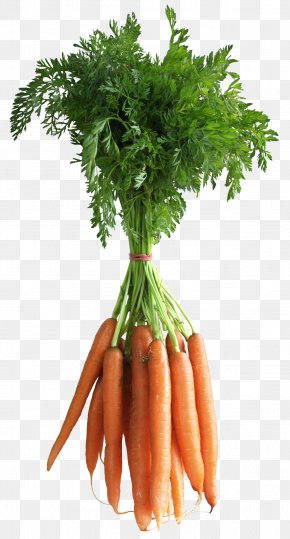 Carrot Picture - Carrot Clip Art PNG