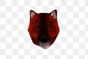 Crypt - Red Fox Dog Canidae Snout PNG