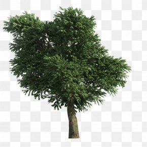 Tree - Stone Pine Tree PNG