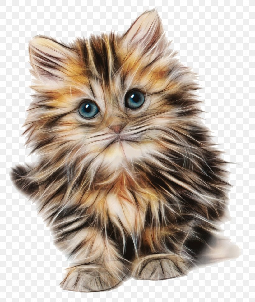 Cute Kitten, Drawing, PNG, 936x1110px, Cat, American Curl, British Semi Longhair, Calico Cat, Carnivoran Download Free