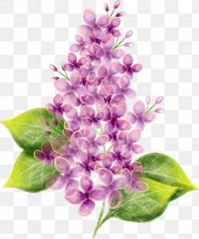 Vector Hand Painted Purple Lilac Flower - Lilac Flower Watercolor Painting PNG