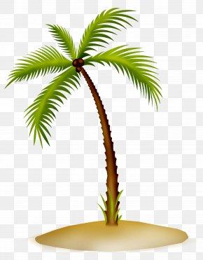 PARADİSE - Arecaceae Asian Palmyra Palm Date Palm Flowerpot Coconut PNG
