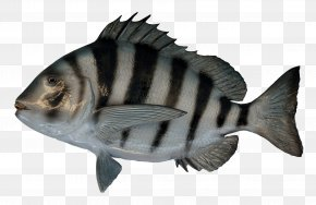 Fish - Fish As Food PNG