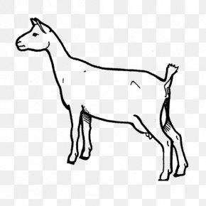 Goat - Nigerian Dwarf Goat Oberhasli Goat Cattle Animal Caprinae PNG