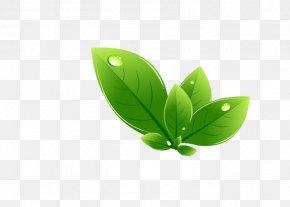 Leaf - Leaf Green PNG
