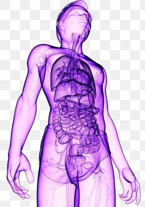 Human Body - Organism Human Body Healing PNG