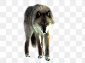 Wolf Image - Gray Wolf PNG