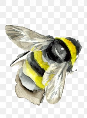 Watercolor Bee - Bumblebee Insect Watercolor Painting PNG