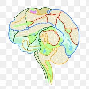 Map The Internal Structure Of The Human Brain - Brain Mapping Human Brain Neuron Euclidean Vector PNG