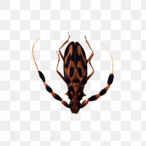 Insect Photos - Insect Graphics Software Clip Art PNG