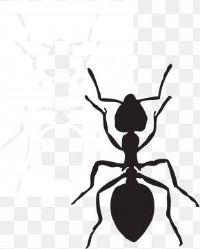 Preschool Ant Cliparts - Ant Free Content Website Clip Art PNG