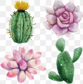 Watercolor Flowers - Cactaceae Watercolor Painting Succulent Plant Euclidean Vector Illustration PNG