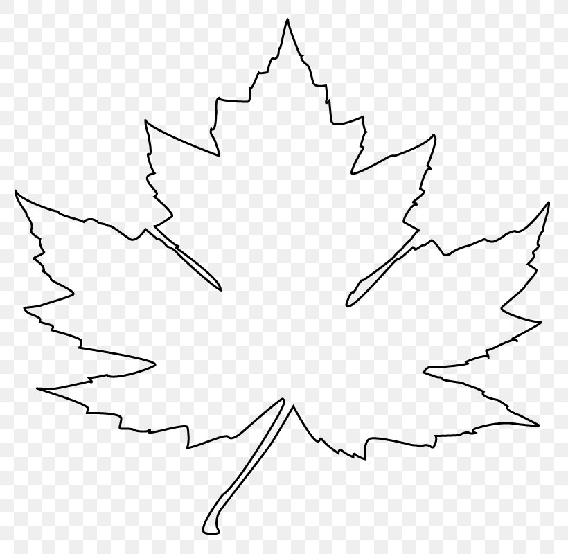 Maple Leaf Drawing Flag Of Canada Clip Art Png 800x800px