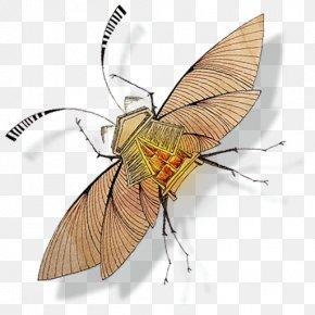 Persianatus - Fly Pollinator Invertebrate Arthropod Insect PNG