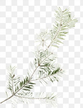 Tree - Tree Branch PNG