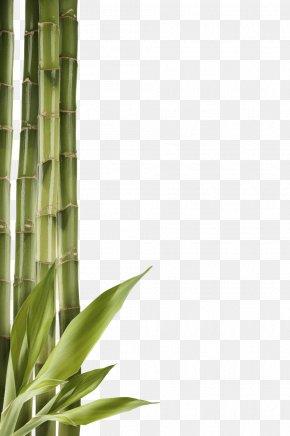 Bamboo Clipart - Bamboo Clip Art PNG