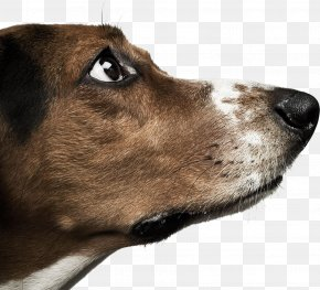 Free Dog Pull Material - Basset Hound Dachshund Labrador Retriever Chihuahua Stock Photography PNG