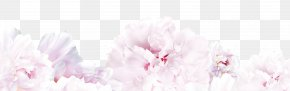 Flowers - Floral Design Spring Cherry Blossom Cut Flowers PNG