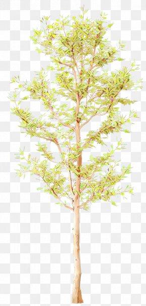 Flowering Plant Flower - Tree Plant Branch Leaf Twig PNG