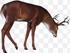 Deer - Red Deer Sweden PNG