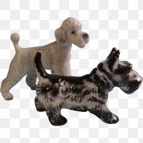 Poodle - Dog Breed Pet Companion Dog Canidae PNG