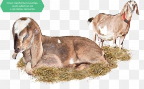 Goat - Goat Cattle Milk Grey Geese Bird PNG