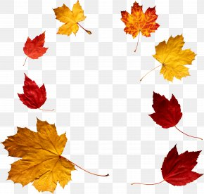 Autumn Leaf - Autumn Leaf Color Clip Art PNG
