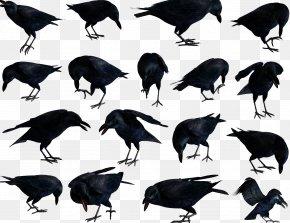 Bird - American Crow Rook Bird Common Raven New Caledonian Crow PNG