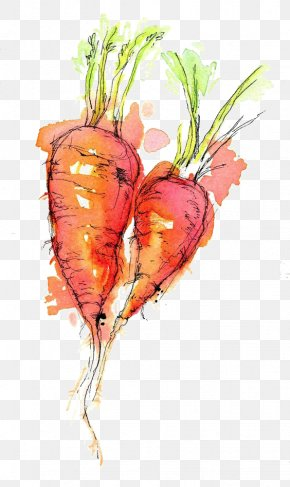 Carrot - Watercolor Painting Drawing Ink Sketch PNG