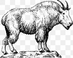 Mountain Goat Drawing Vector Graphics Clip Art PNG
