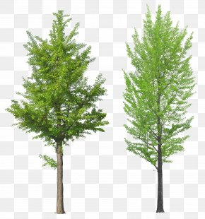 Tree Image - Tree PNG