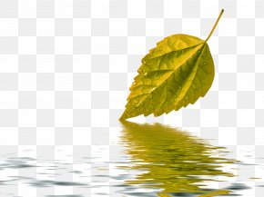 Autumn Leaves - Water Paper Leaf Green Wallpaper PNG