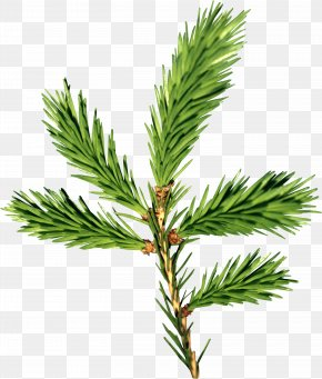 Fir-Tree Image - New Year Tree Spruce Branch Paper Christmas Tree PNG