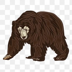 American Black Bear Fictional Character - Grizzly Bear Bear Brown Bear Animal Figure Sloth Bear PNG