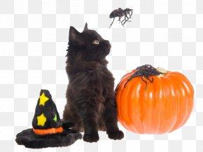 Halloween Kitten Image - Black Cat Dog Halloween Pet PNG