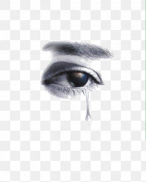 Eye - Eye Close-up PNG