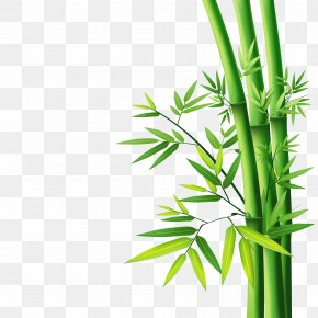 Bamboo - Bamboo Wallpaper PNG