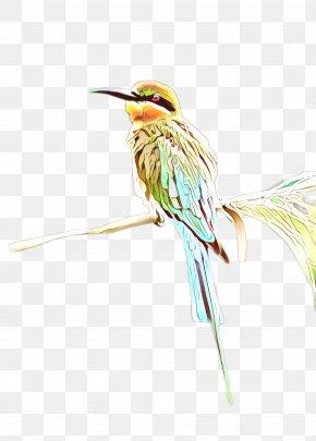 Plant Coraciiformes - Hummingbird PNG