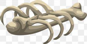 Bones Free Download - Bone Human Skeleton Clip Art PNG