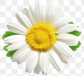 Daisy Clipart Image - Blog Clip Art PNG