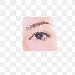 Eyebrow - Eyelash Extensions Eyebrow Lip Cheek Make-up PNG