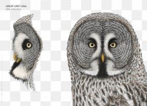 Grey Owl Pattern - Great Grey Owl Clip Art PNG